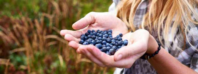 Namirnice u kojima je najviše pesticida