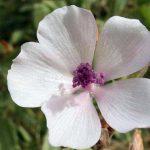 Biljke koje lečе