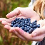 Namirnice u kojima je najviše pesticida i kako ih se rešiti