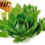 Prirodan lek protiv mioma i cisti od čuvarkuće i meda
