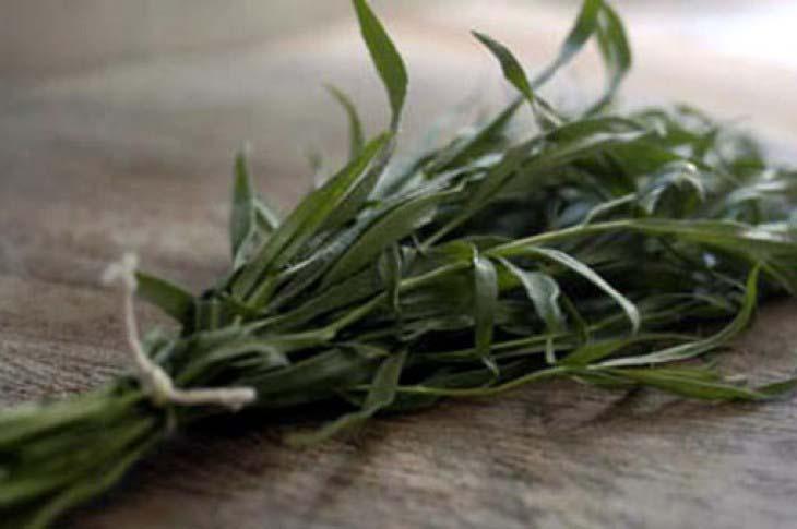Estragon biljka – začin