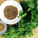 Korijander – začinska, i lekovita biljka