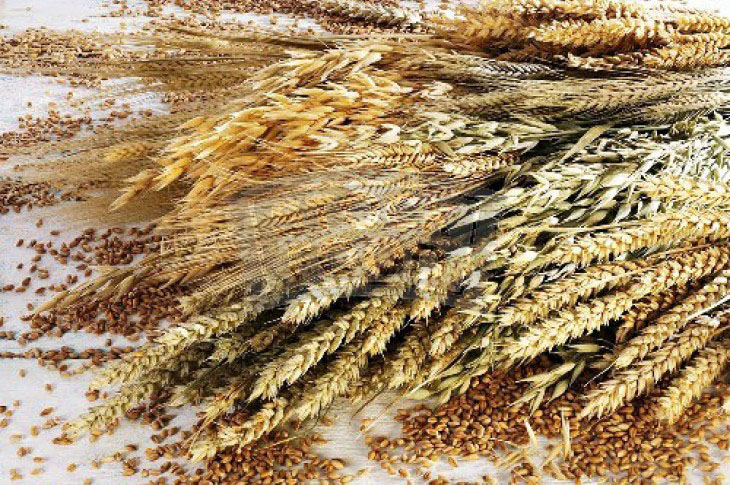 Cela zrna pomažu u regulaciji telesne težine